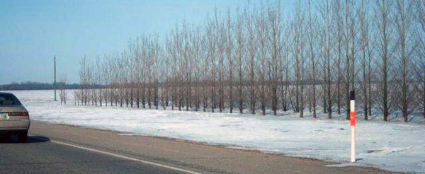 Shelterbelts prevent snow accumulation on roads and driveways or in farmlands